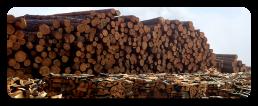 Дървен материал Пловдив
